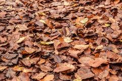 Tekstura jesienni liście Fotografia Royalty Free