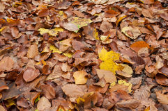 Tekstura jesienni liście Fotografia Stock