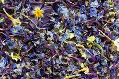 tekstura jest miksturą susi barwiący kwiatów płatki Obraz Stock