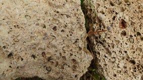 Tekstura kamienie 3 i żwir Zdjęcia Royalty Free