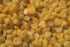 Tekstura kolorów żółtych gotowani kukurydzani nasiona Zdjęcia Royalty Free