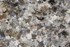 Tekstura kolorowy liszaj na kamieniu obraz stock