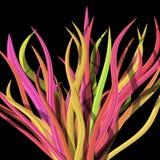 Tekstura koloru kwiat na czerni zdjęcia stock