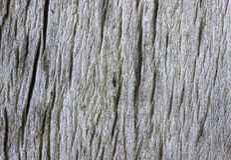 Tekstura korowaty drewno Obraz Royalty Free