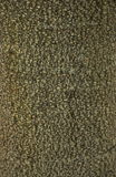 Tekstura korowaty drewno Fotografia Royalty Free
