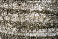 Tekstura korowaty drewno Fotografia Stock