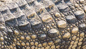Tekstura krokodyla skóra Zdjęcia Royalty Free