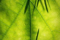 Tekstura liść z cieniami Zdjęcie Stock