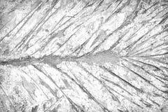 Tekstura li?cie drukowali wzory na betonowym pod?ogowym tle obraz royalty free