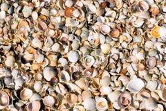 Tekstura liitle morze łuska na piasku, odgórny widok zdjęcia royalty free
