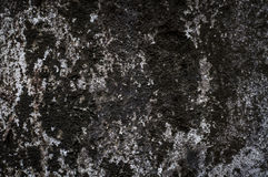 Tekstura mech stara ściana Zdjęcie Stock