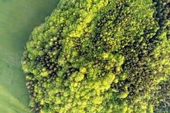Tekstura mieszany las na pogodnym letnim dniu blisko trawa terenu Powietrzna dron fotografia Fotografia Stock