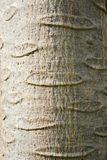 Tekstura na barkentynie Zdjęcie Royalty Free