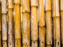 Tekstura naturalnego felling ścienny dekorować od bambusa Zdjęcie Stock