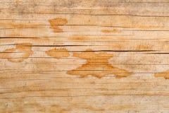 Tekstura naturalny drzewo z niezwykłą strukturą fotografia stock