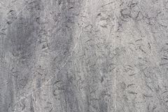 Tekstura od bird& x27; s ślada na piasku Obraz Royalty Free