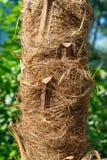 Tekstura palmowy bagażnik obrazy royalty free