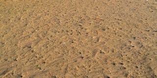 Tekstura piasek z pączkami w jesieni zdjęcia royalty free