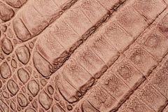 Tekstura prawdziwej skóry zakończenie, embossed pod skórą jasnobrązowego krokodyla, tło Obrazy Stock