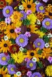 Tekstura różny spadek kwitnie, odgórny widok kwiat światła playnig tło Fotografia Stock