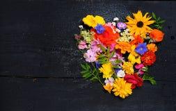 Tekstura różnorodni ogrodowi kwiaty, odgórny widok zdjęcia stock