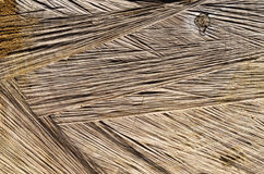 Tekstura rżnięty drzewo Zdjęcia Stock
