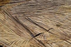 Tekstura rżnięty drzewo Obraz Royalty Free