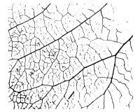 Tekstura roślina liść fotografia royalty free