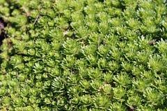 Tekstura rośliny Obrazy Stock