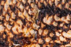 Tekstura rybia grill skóra Fotografia Royalty Free