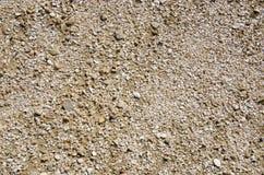 Tekstura seashells Fotografia Stock