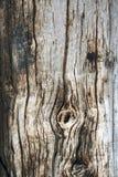 Tekstura stara drewniana deska Fotografia Stock