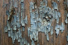 Tekstura stara farba na drzewie zdjęcie stock