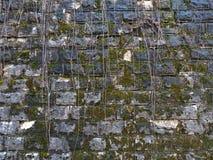Tekstura stara kamienna ściana zakrywał zielonego mech Tło zdjęcie royalty free