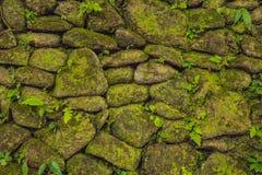 Tekstura stara kamienna ściana zakrywał zielonego mech w forcie Rotterdam Makassar, Indonezja, - obraz royalty free