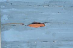 Tekstura stary drewniany błękit Zdjęcia Royalty Free