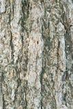 Tekstura stary drewniany drzewny bagażnik w vertical ramie Zdjęcia Royalty Free