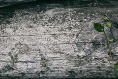 Tekstura stary drewniany naturalny tło Stary szary drewno zdjęcie stock