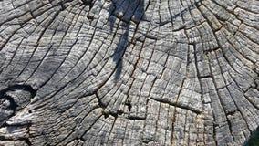 Tekstura stary drzewny fiszorek z pęknięciami Obraz Stock