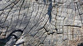 Tekstura stary drzewny fiszorek z pęknięciami Obrazy Stock
