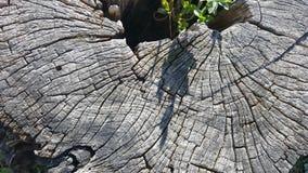 Tekstura stary drzewny fiszorek z pęknięciami Obrazy Royalty Free