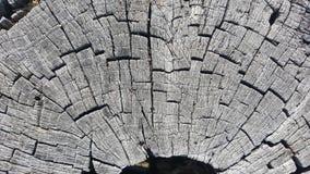 Tekstura stary drzewny fiszorek z pęknięciami Fotografia Stock