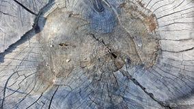 Tekstura stary drzewny fiszorek z pęknięciami Zdjęcia Royalty Free