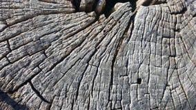 Tekstura stary drzewny fiszorek z pęknięciami Zdjęcie Stock