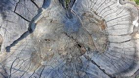 Tekstura stary drzewny fiszorek z pęknięciami Obraz Royalty Free