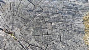 Tekstura stary drzewny fiszorek z pęknięciami Fotografia Royalty Free