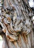 Tekstura stary drzewo Obrazy Stock