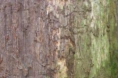 Tekstura stary, przegniły drewno, Kłamać w forestDesign tle zdjęcie royalty free