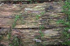 Tekstura stary, przegniły drewno, Kłamać w forestDesign tle obraz stock