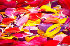 tekstura stubarwni kwiatów płatki Zdjęcia Stock